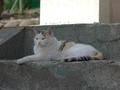 白峯寺の猫, #8084