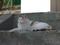 白峯寺の猫, #8085