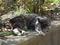 白峯寺の猫, #8086