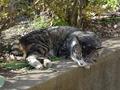 白峯寺の猫, #8087