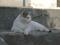 白峯寺の猫, #8088