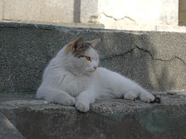 白峯寺の猫, #8089