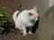 白峯寺の猫, #8090