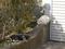 白峯寺の猫, #8092