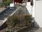 白峯寺の猫, #8094