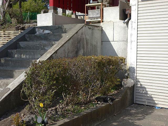 白峯寺の猫, #8095