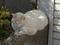 白峯寺の猫, #8096