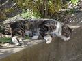 白峯寺の猫, #8097