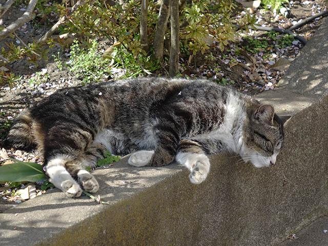 白峯寺の猫, #8098
