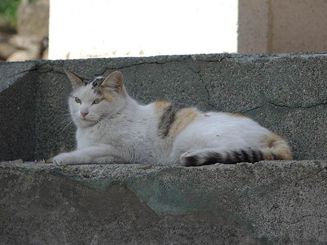 白峯寺の猫, #8100