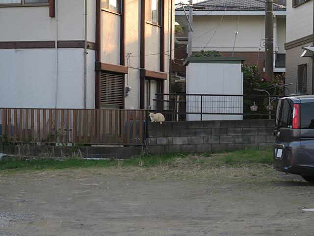 Local Cat, #1282
