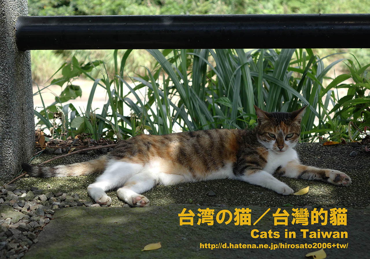 Cats in Taiwan Cards, #4371