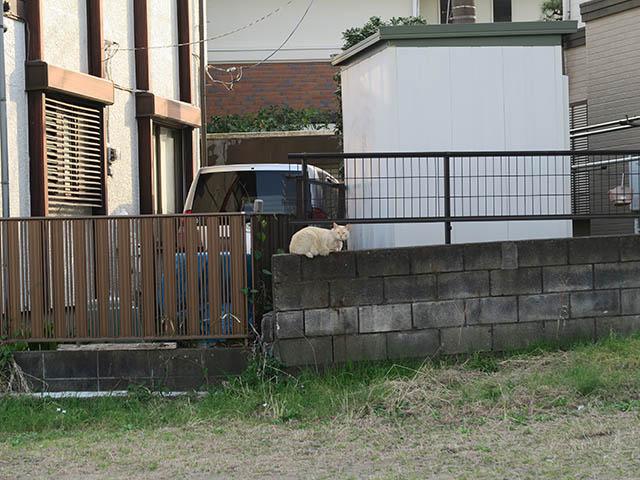 Local Cat, #1290