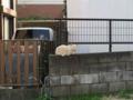 Local Cat, #1292
