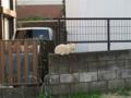 Local Cat, #1293