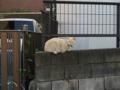 Local Cat, #1295