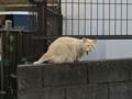 Local Cat, #1296