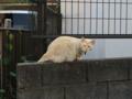 Local Cat, #1297