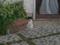 Local Cat, #1298
