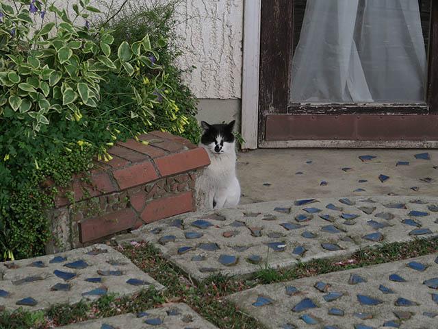 Local Cat, #1299