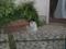 Local Cat, #1300