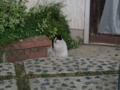 Local Cat, #1301