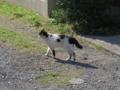 Local Cat, #1302