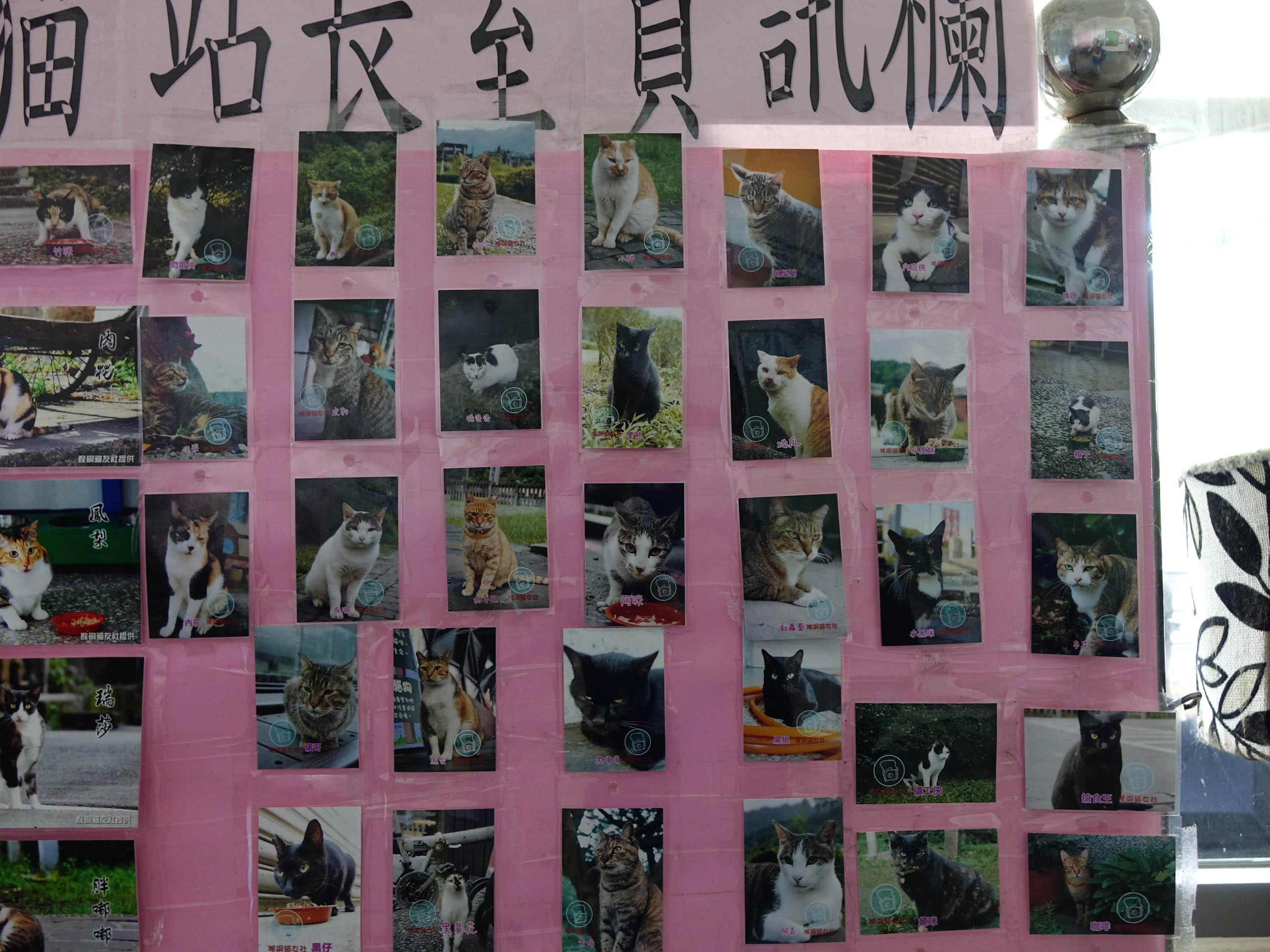 Cats of Houtong, #8201