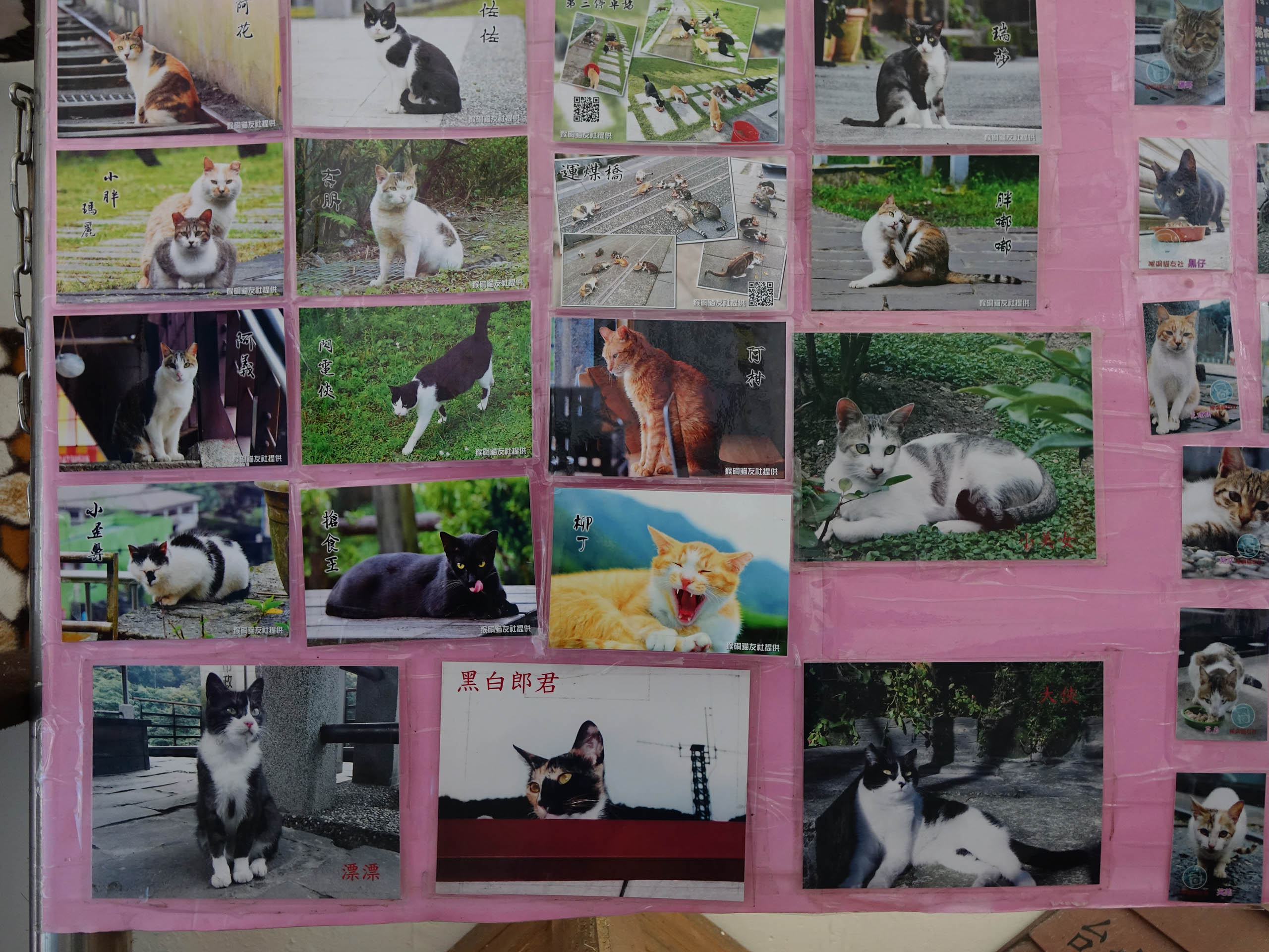 Cats of Houtong, #8204