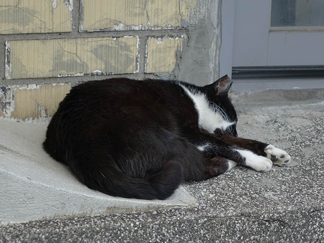 Cats of Houtong, #8207