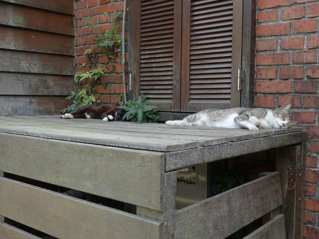 Cats of Houtong, #8225