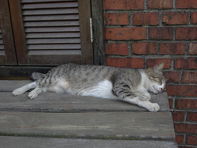 Cats of Houtong, #8226