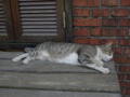 Cats of Houtong, #8227