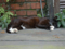 Cats of Houtong, #8229