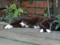 Cats of Houtong, #8230