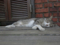 Cats of Houtong, #8231