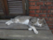 Cats of Houtong, #8232