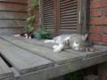 Cats of Houtong, #8234