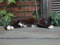 Cats of Houtong, #8236