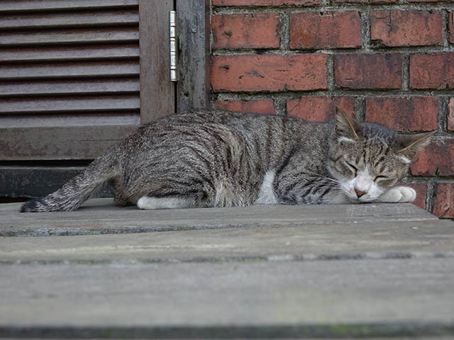 Cats of Houtong, #8237
