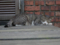 Cats of Houtong, #8238