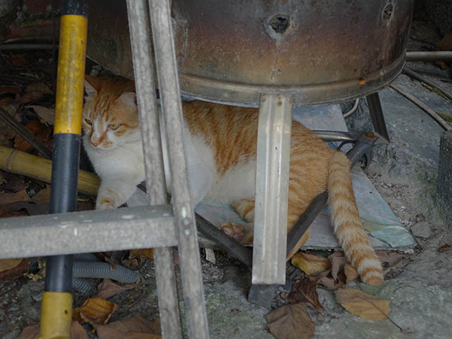 Cats of Houtong, #8240