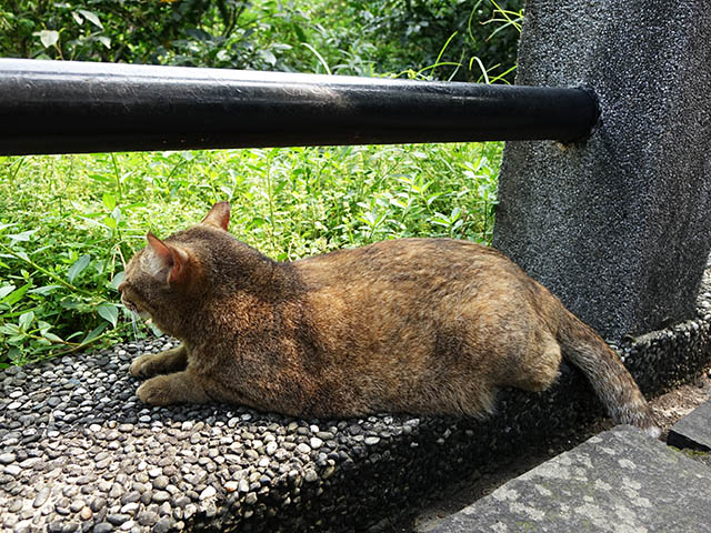 Cats of Houtong, #8250