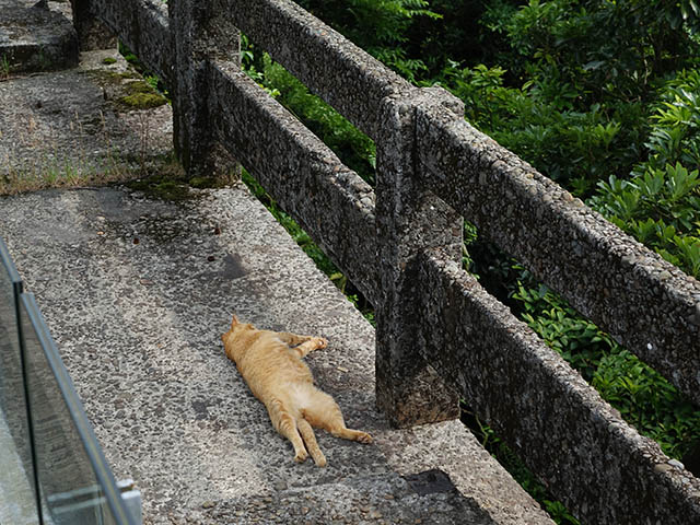 Cats of Houtong, #8254