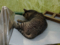 Cats of Houtong, #8260