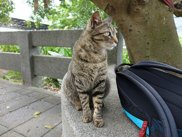 Cats of Houtong, #8264