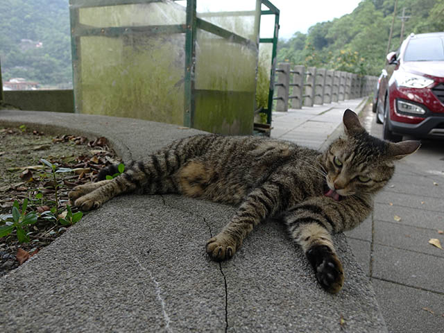 Cats of Houtong, #8270