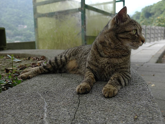Cats of Houtong, #8272