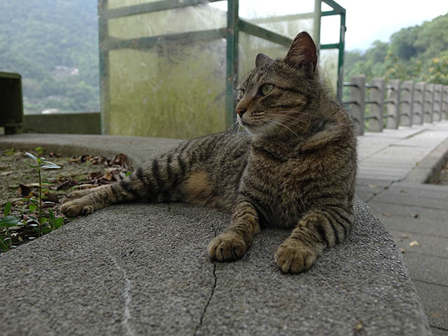 Cats of Houtong, #8273