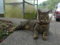 Cats of Houtong, #8274
